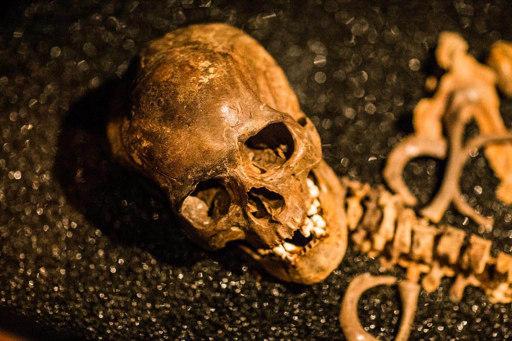 skull w bokeh