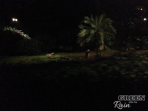 160912f Singapore Night Safari _059