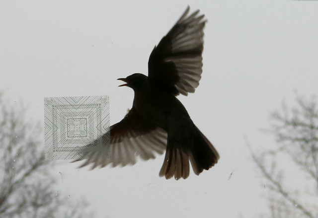 silhouette from the side, mouth open, right wing up, left wing down