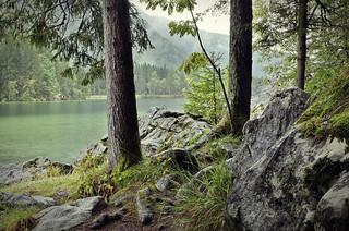 Zauberwald Hintersee