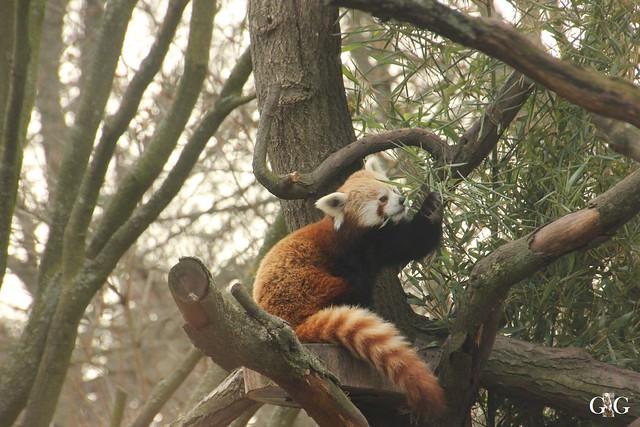 Ausflug Zoo Magdeburg 11.03.2017 Teil. 21