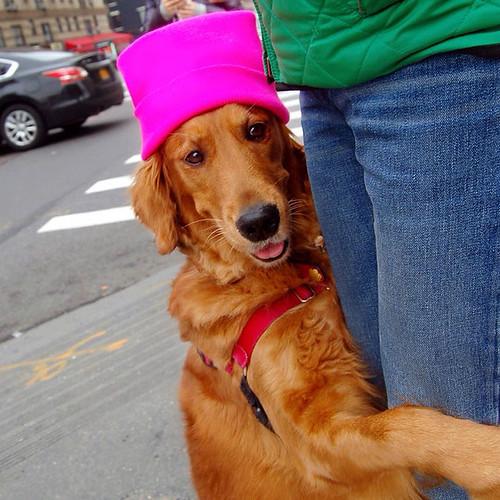 dog-gives-hugs-louboutina-retriever-new-york-15