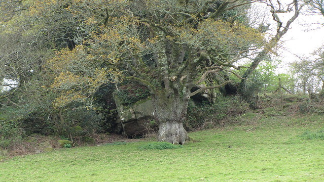 I spotted this outcrop, on private land, from the farm building on the public bridleway.