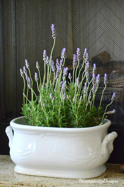 Lavender in ironstone footbath-Housepitality Designs