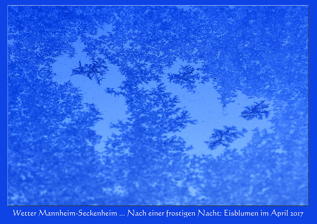 Wetter Mannheim-Seckenheim am 20. April 2017: Die Sonne scheint, der Himmel ist blitzeblau ... bis zu 10 °C sollen es heute werden. Die vergangene Nacht jedoch war frostig. Am frühen Vormittag zeugen noch die Eisblumen am Fenster von nächtlichen Minusgraden. Aprilwetter halt ... Foto: Brigitte Stolle