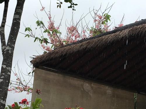 今日のサムイ島 4月4日 雨です