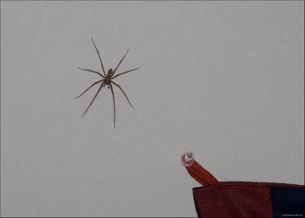 NOT a Hobo Spider | UPDATED: A Washington State University s… | Flickr