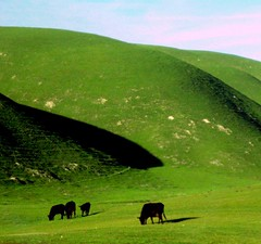 The Green, Green Grass of California | by moonjazz
