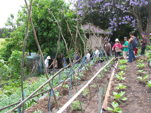 Visit to Glovers St Permaculture Garden | by Milkwood.net