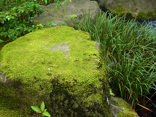 Moss on stone | by DocChewbacca