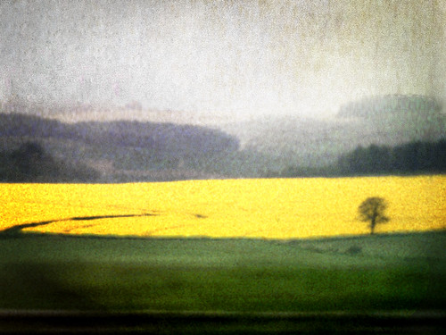 Landscape #12 (Yellow field) | by ◦Judex◦