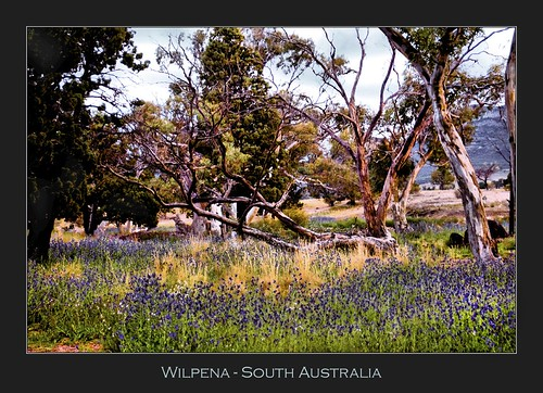 Wilpena - South Australia | by CrazyNotion (wandering and wondering)