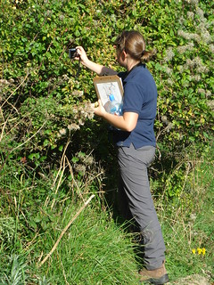 Butterfly Survey | by Durlston Country Park