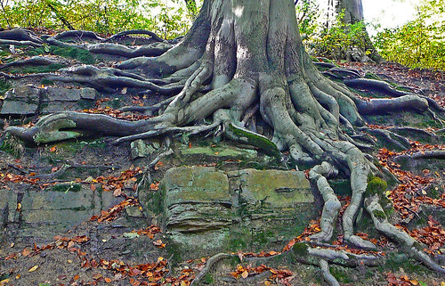 Roots | by Tim Green aka atoach