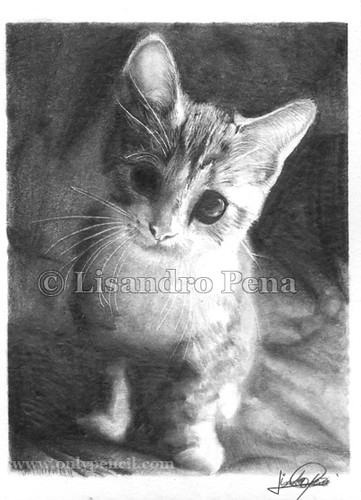 Kitten 2 pencil drawing by onlypencil