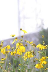 Yellow and Grey | by rosewoodoil