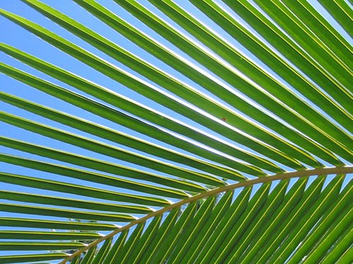 Sago Palm | by Steven Beger Photography (Beger.com Productions)