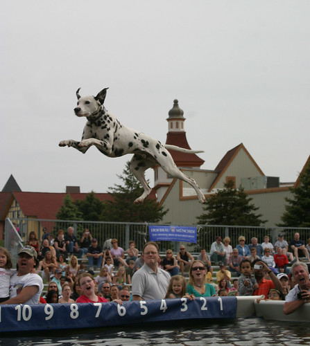 Leaping Dalmations! | by Frankenmuth Fun