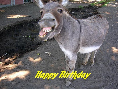 donkey `1 happy birthday