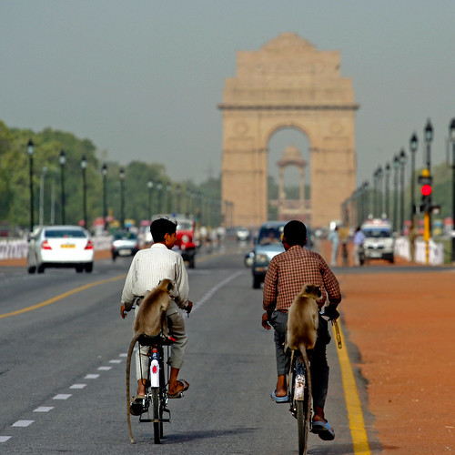 Monkeys on bicycles, india gate, delhi | by Paul Cowell