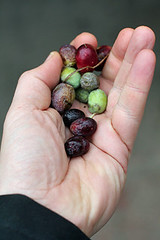 handful of olives | by David Lebovitz