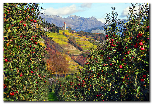 Apples and Grapes | by Sergio Parisi