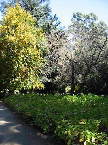 Prado los tilos jard n bot nico nacional vi a del mar for Jardin botanico vina