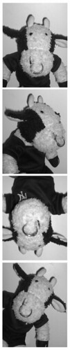 Here's my photo strip! | by Bully the Little Stuffed Bull