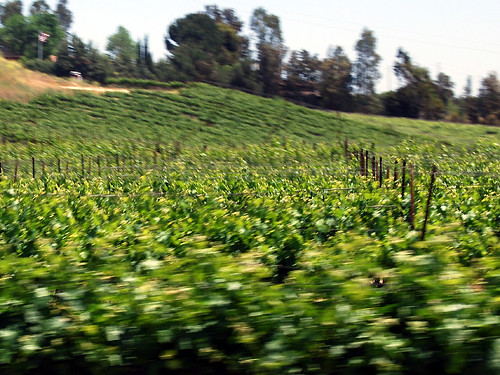 Temecula Wine Country Car Accident