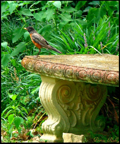 Robin Sitting On My Bench | by swt snookie