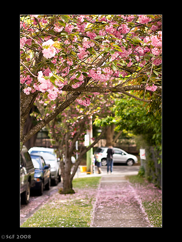 Cherry blossoms dating online in Sydney