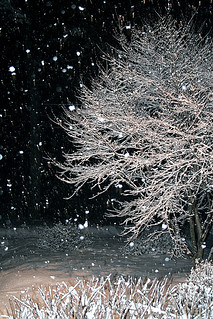 053/366 falling snow! | by *deb*