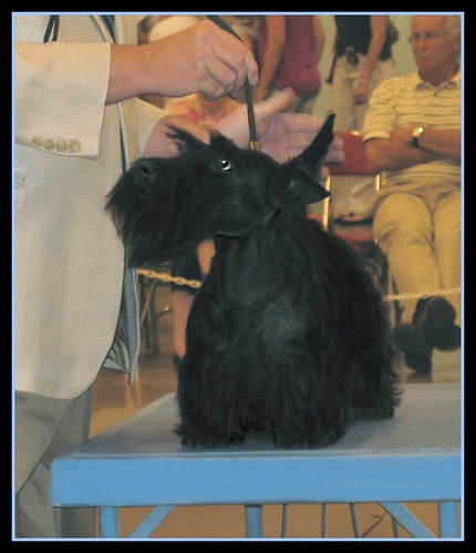 Scottish Terrier Specialty | by M.P.N.texan