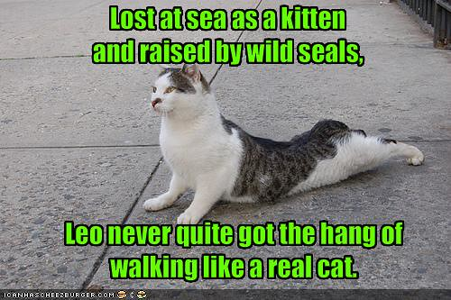 cat walks like seal joke