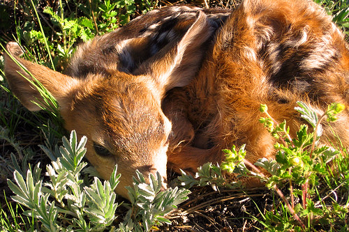 Brand New Fawn | by Outdoorsie @ CO