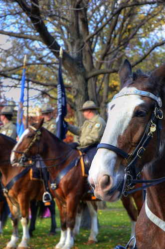 Boston Police and Park Ranger Horses before the Veteran's Day Parade | by Craig Stevens <castevens12>