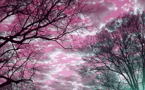 Clouds & Trees at Sunset in Kentucky with Pink Sky 1680 x 1050 | by Crystal Writer