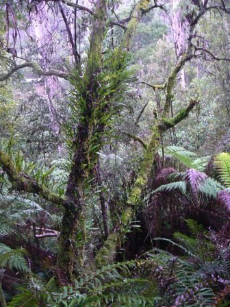 how to get to remarkable cave tasmania