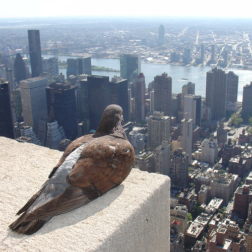 Empire State Pigeon | by ZeroOne