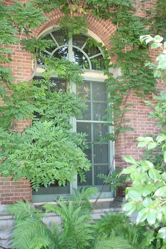 Filoli Gardens Vine Shrouded Window Jill Clardy Flickr