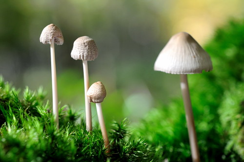 Slim Mushrooms | by Kriss on flickr