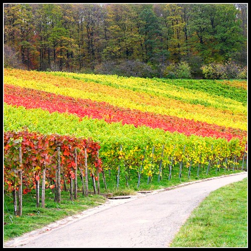 Last View at the Vineyard - Fall Landscape in Germany | by Batikart