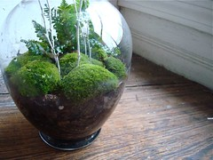 terrarium trial | by Justin Snow