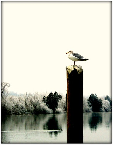 seagull on a cold day | by calamityjan2008