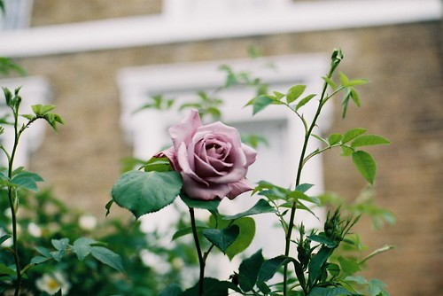 flowers of london | by fieldguided