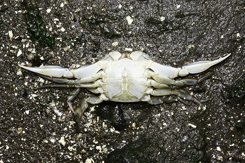 jesus crab | by kevin finnerty pictures