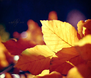 Forever Autumn | by ~Shilpa