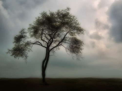 ~Lonely~ | by MaryleeUSA