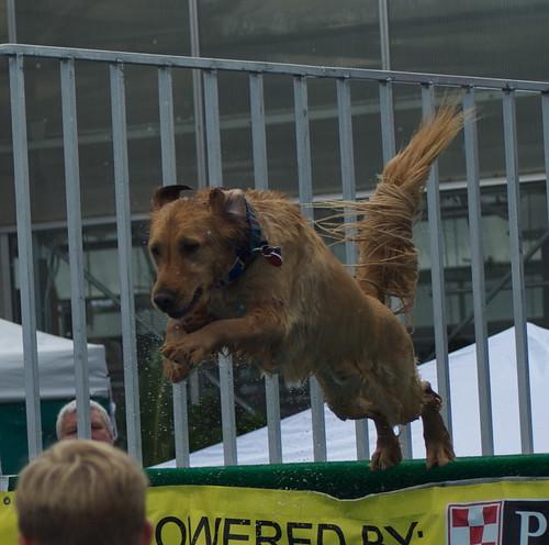 Ultimate Air Dog Breed Abbreviations