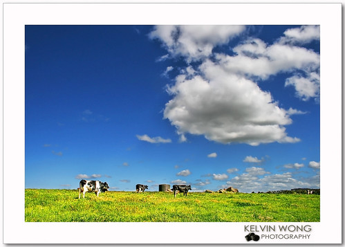 Cow Farm 牛场 | by Kelvin Wong (Away)